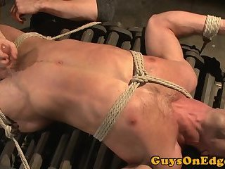 Handsome muscle stud edged while bound